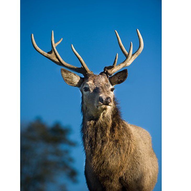 Vennersys launches Online Ticketing with Bucklebury Farm & Deer Safari Park